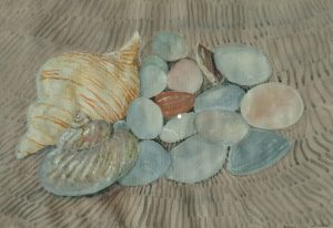 Beautiful painting of seashells by Kathleen Morrison